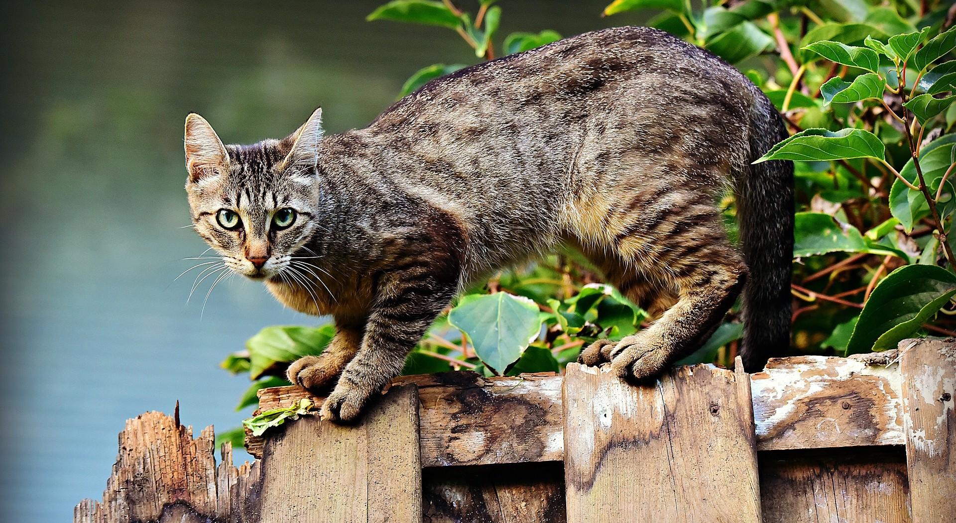 pisici-capcane-repelenti