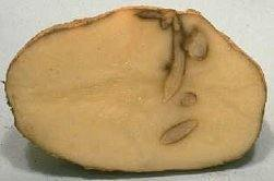 incoltirea interioara a cartofilor