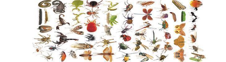 tine insectele la distanta