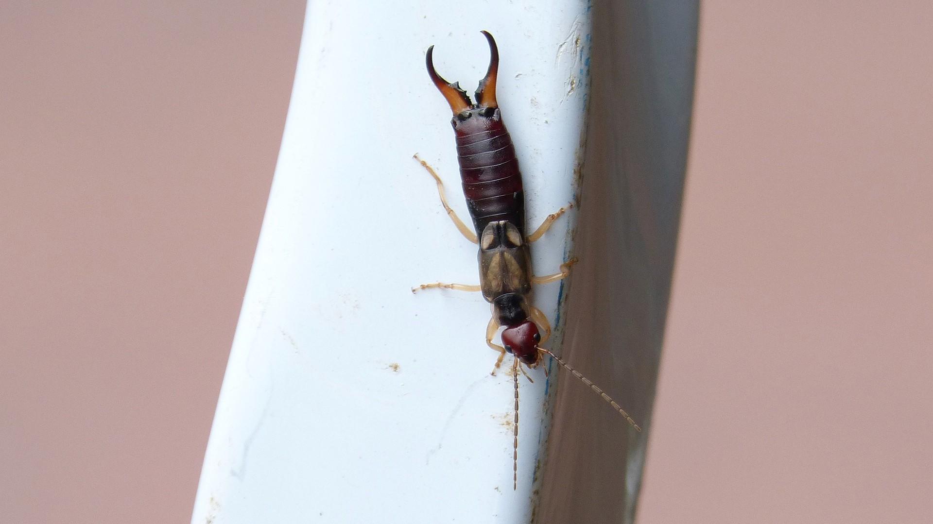 urechelnite-insecticide-tratamente