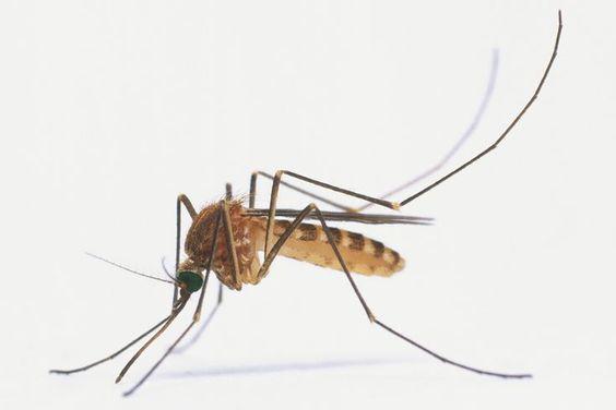 tantari-insecticide-solutii