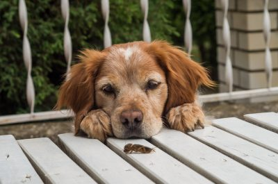 tratamente-dezinsectie-protejand-animalele-de-companie