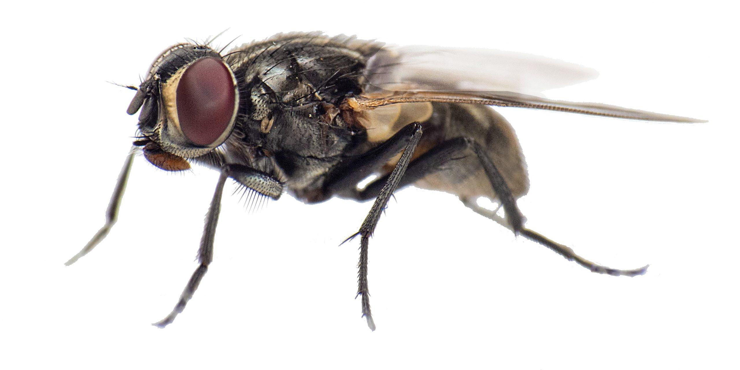 muste-solutii-tratamente-insecticide