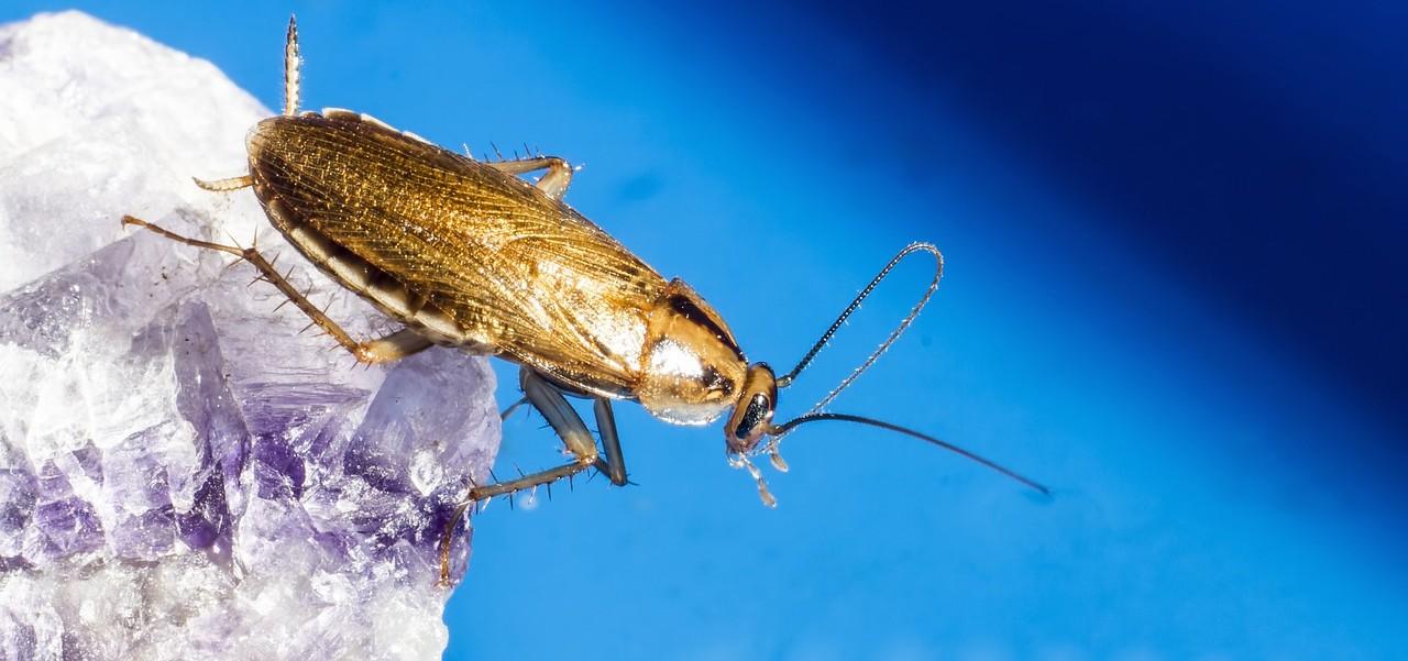gel-insecticid-gandaci