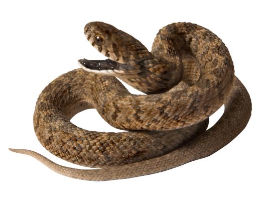 serpi-repelenti
