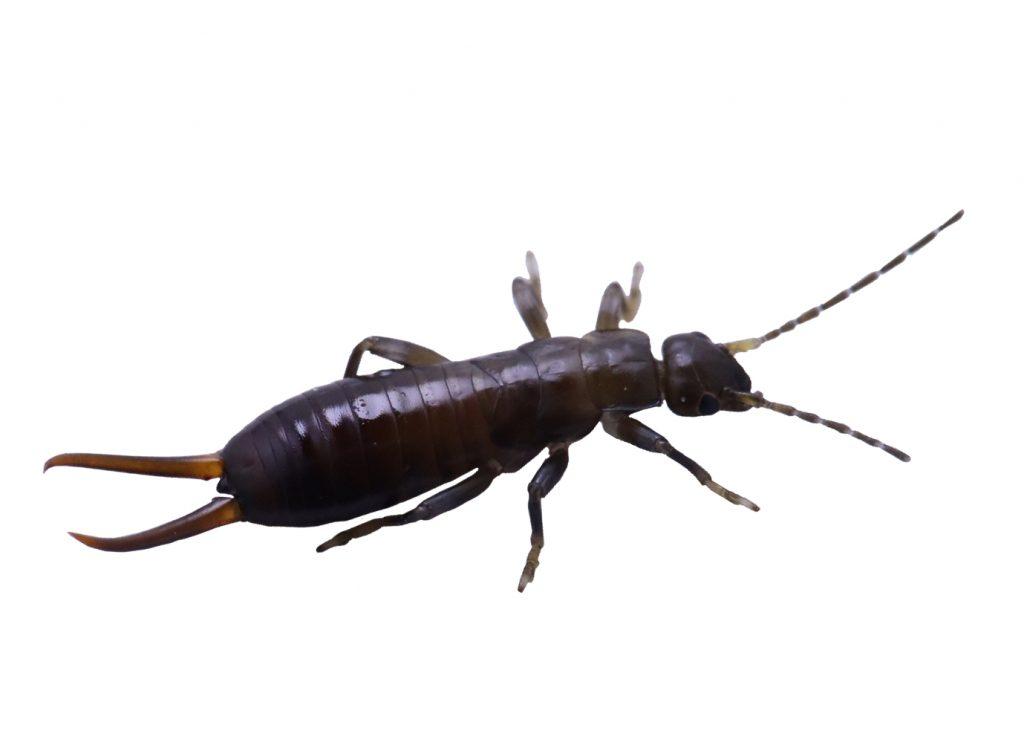 urechelnite-tratamente-insecticide