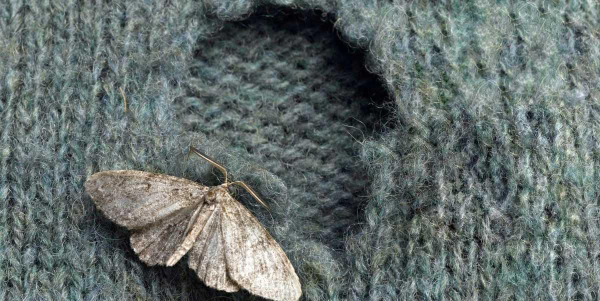 scapa-de-moliile-de-textile