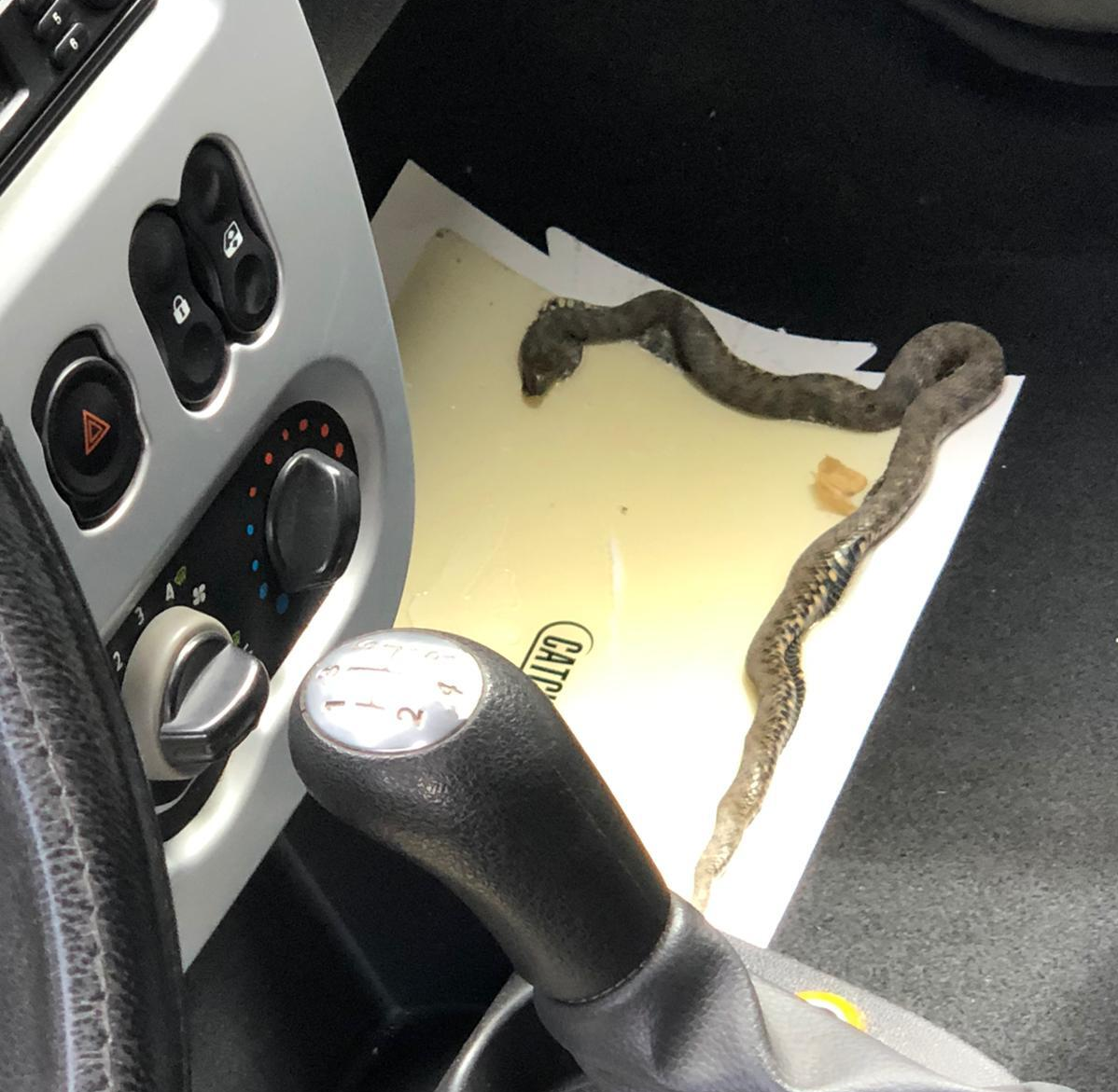 capcana-adeziva-serpi