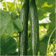 pieterpikzonen seminte castraveti marketmore 10 g - 1
