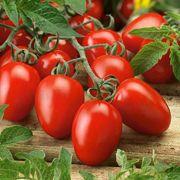 pieterpikzonen seminte tomate rio grande 10 g - 1